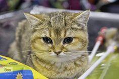 Kitten by feneek2010. Please Like http://fb.me/go4photos and Follow @go4fotos Thank You. :-)