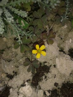 #little#flower#yellow