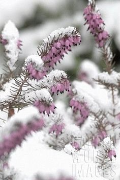 ~Pink Winter Day~