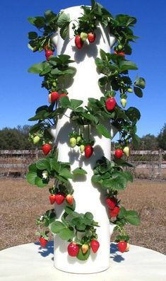 Yummy Patio Gardens: Growing tomato Plants In Pots Beautiful Residential La Urban Farms Strawberry Tower, Strawberry Planters, Strawberry Garden, Vertical Vegetable Gardens, Veg Garden, Vegetable Garden Design, Garden Bed, Vegetable Gardening, Organic Gardening