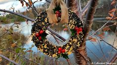 Great step by step tutorial! Attract beautiful birds and save money at the same time by making your own pretty DIY Birdseed Wreath! This is a fun project to do with the kids! | bird feeder, homemade, backyard birds, craft