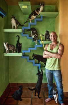 Man Builds Cat Paradise For His 22 Rescue Cats – Bernice Leon – Cat playground outdoor Cage Chat, Adventure Cat, Cat Playground, Cat Enclosure, Reptile Enclosure, Photo Chat, Cat Condo, Outdoor Cats, Outdoor Play