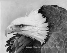 Image result for pencil and charcoal drawings
