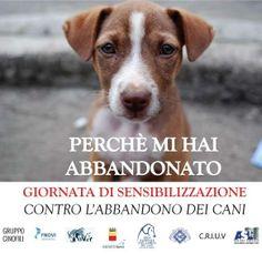 La Sezione di #Salerno della #LegadelCane organizza una giornata di #sensibilizzazione contro l' #abbandono il 21/6
