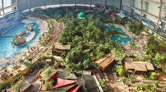 L'hangar si trasforma in oasi tropicale