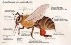 Tiny abejas Craft Botones 1ST Class Post Flor de Insectos de Jardín Pequeño Novedad Comida