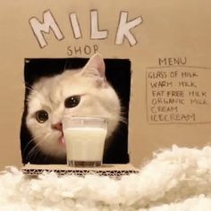 Milk shop From Most Beautiful Animals, Unique Animals, Cute Animals, Farm Animals, Funny Cat Photos, Funny Cats, White Kittens, Cats And Kittens, Milk Store