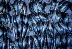 Essaouira fish market.