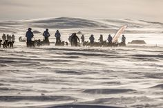 Fjällräven Polar is an event like no other - 300 km of snowy wilderness between participants who are not outdoor experts and the finish line...