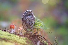 Tanja Brandt owl buho3