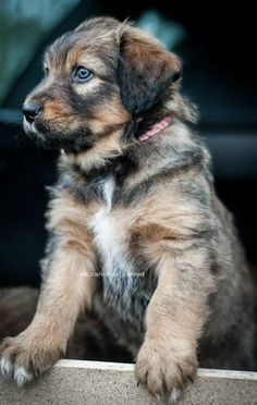 #perro #animales #mascotas #felicidad #ternura  En @tiendanimal nos ha encantado esta foto. www.tiendanimal.es