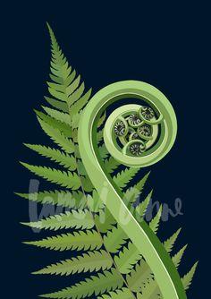 Koru Silver Fern Limited Edition Art Print by artist Lamai Anne. Bring the New Zealand outdoors into your home. Maori Symbols, Maori Patterns, Fern Tattoo, Silver Fern, Maori Designs, Nz Art, Maori Art, Wood Sculpture, Abstract Sculpture