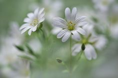 A touch of White by Jacky Parker on 500px