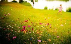 landscapes, flowers, children, grass, meadows, wildflowers ...