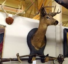 Old Deer Mount With Holding Rack   Dealer #4078  $225  Lucas Street Antiques Mall 2023 Lucas Dr.  Dallas, TX 75219  Located close to Dallas' Design District within walking distance of the Wo