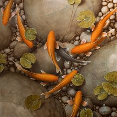 All That Glitters ~ by Terry Gilecki White Rock Gallery Koi Art, Fish Art, Pretty Fish, Fish Ponds, Button Crafts, All That Glitters, Goldfish, Pond Life, Art World