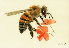 Insect Paintings - Honey bee watercolor painting by Juan Bosco