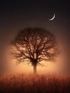 Tree of light. pic.twitter.com/LdJhXtHESf