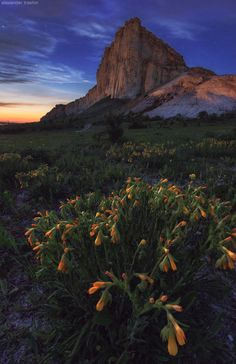 wowtastic-nature:  FlowersbyAlexander Trashinon 500px○Nikon D600, 700✱1080px-rating:93.9☀Photographer:Alexander Trashin,Sevastopol,Russia
