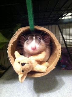 """The memorable """"rat with a stuffed dog in a toilet roll"""" incident of 2013. 