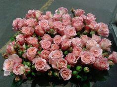 #Rose # Rose # Augusta Louise Available at www.barendsen.nl