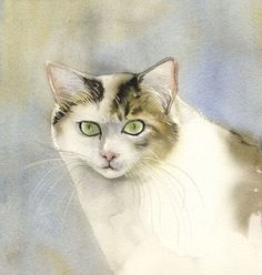 "ARTFINDER: yellow and white cat by Alfred  Ng - original transparent watercolor painting ""yellow and white cat"" on arches watercolor paper, 11""x11"""