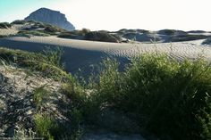 Morro Strand State Beach scene taken from the Back Dunes 08Oct2011 by mikebaird, via Flickr