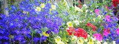 Homegrown Flowers Facebook cover - Facebook timeline covers maker