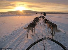 Snow dogs...it'd be so cool if we cold do this with Harley