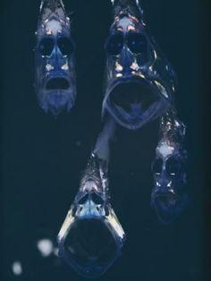 Balta Balığı