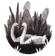 Swans - Ella Bailey