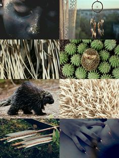 "Ilvermorny Aesthetic - The Pukwudgie: ""The Pukwudgies' features resemble those of a human. Their skin is described as being a smooth grey, and at times has been known to glow. They can transform into a walking porcupine, are able to use magic, have poison arrows, and can create fire at will."""