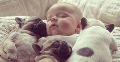 11 απίθανες φωτογραφίες ενός μωρού περιτριγυρισμένου από κουταβάκια μπουλντόγκ
