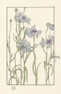 "The Cornflower - Jeannie Foord - ""Decorative Flower Studies"", Pochoir Prints, 1901."