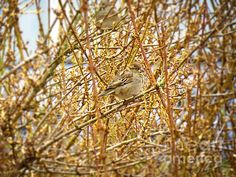 Camouflage by Shelly Weingart - Camouflage Photograph - Camouflage Fine Art Prints and Posters for Sale