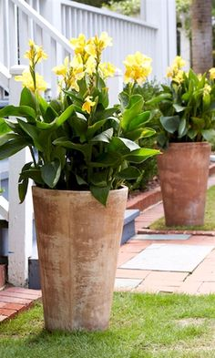 Imagine a garden that is easy to grow and even easier to harvest. It's possible with a few containers and a handful of herbs. Grow a variety of herbs in a single container, like this terra-cotta…MoreMore #GardeningDesign