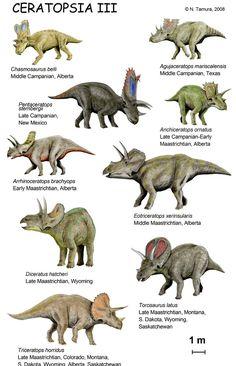 Ceratopsia III / © N. Tamura. Verwendet mit freundlicher Genehmigung des Autors.