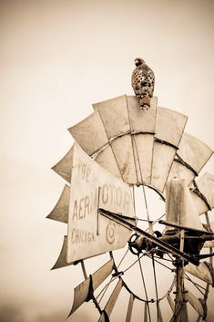 Farmhouse art photo or canvas of a hawk on a windmill, western art, western wall art, rustic decor, canvas print, Oklahoma photography by TeriJamesPhotography on Etsy https://www.etsy.com/listing/555795536/farmhouse-art-photo-or-canvas-of-a-hawk