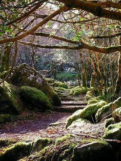 Gougane Barra Forest, County Cork