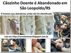 Mural Animal: Cãozinho Doente é Abandonado em São Leopoldo/RS