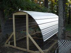 Hoop chicken coop with cattle panels