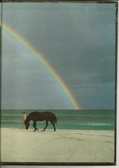This side of the rainbow. 'The Black Stallion, 1979.'