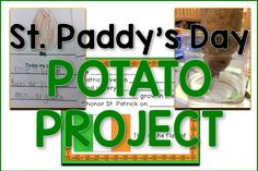 St. Patrick's Potato