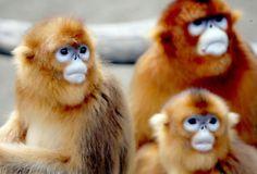 Monkeyyyss