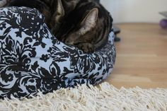 Sleepy Rasputin - from paperbagblog