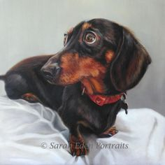 Picture of my dachshund Pedro. Dachshund painting by Sarah Eden Portraits Arte Dachshund, Dachshund Love, Wildlife Paintings, Dog Paintings, Dog Anatomy, Dog Stories, Dog Art, Dog Pictures, Pet Portraits