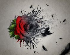 Create an Emotional Abstract Photo Manipulation of a Rose #photoshoptutorials #photomanipulation
