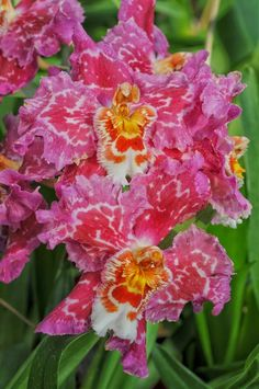 Flowers ~ Orchids | Dreaming Gardens