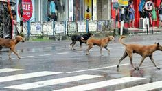 A Group in Kerala Offers Discounts on Guns to Stop Street Dog Menace-Bizzare!! Read more--> https://goo.gl/CIYEz7