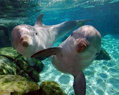 My favorite animal dolphin